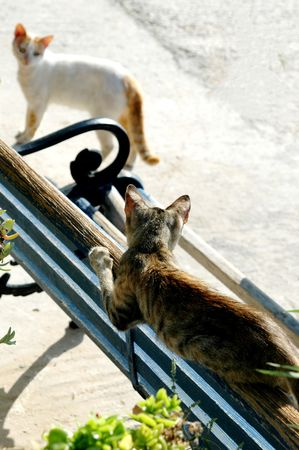 eyeing: two cats eyeing each other