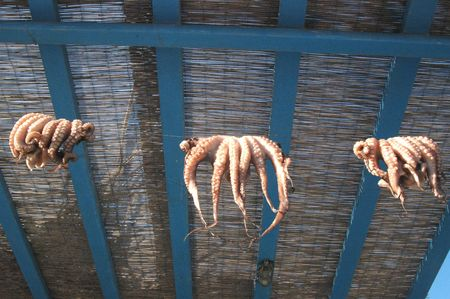curing: octopus curing in the greek islands