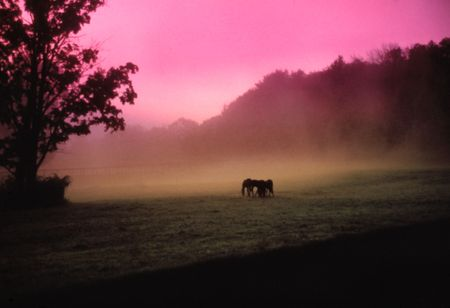 horses in silhouette at the farm at sunrise