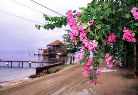 stilts: flowering tree by the beach on a third world caribeean island with an intentional out of focus restaurant on stilts elevated over the water