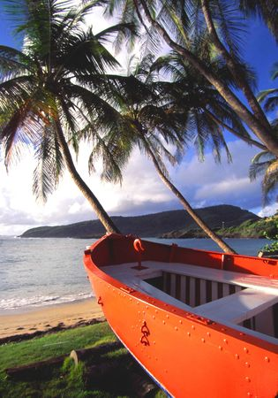 orange boat by coconut trees