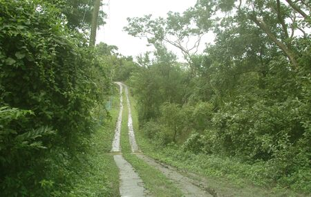 developing: a two lane road in a developing caribbean island jungle
