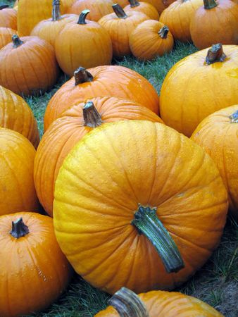 fading: autumn pumpkins with focus on front pumpkin fading  to background Stock Photo