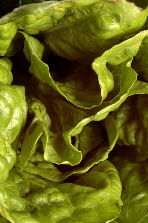 romaine lettuce macro
