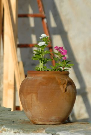 greek pot: fiori in vaso isole greche