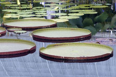 lily pads that look like trays