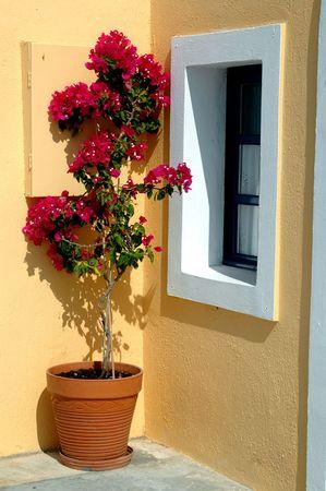greek pot: Vaso di fiori nelle isole greche