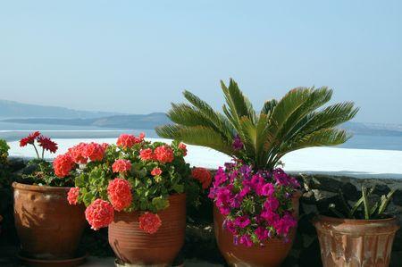 greek pot: Fiori e piante sul patio grecia isole greche mare aegean Santorini