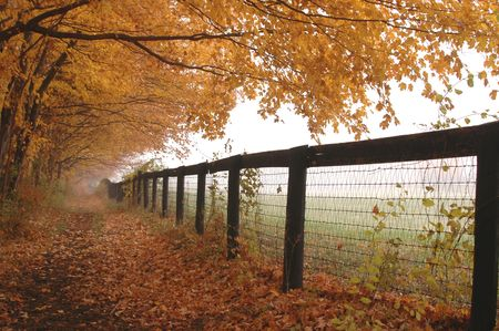 soggy: horse farm fence with mist autumn leaves golden