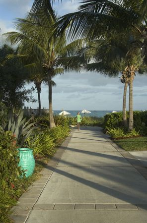 resort walkway to beautiful beach with palm trees by the sea photo