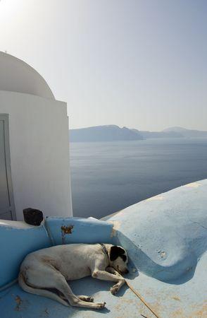 dog sleeping over greek island house clasic architecture santorini aegean sea photo
