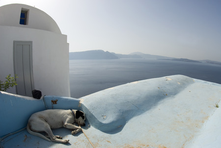 dog sleeping in shade classic greek island architecture santotini Stock Photo - 1440678