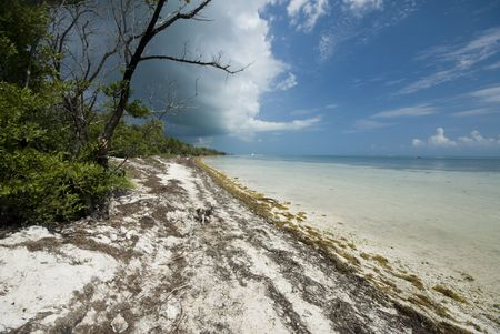 cloudy and ominous coco plum beach florida keys with small dog photo