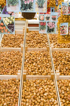 vend: tulip flower bulb store display in famous flower market amsterdam holland Stock Photo
