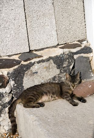 catnap: cat sleeping in the mediterranean sunlight greek islands greece  Stock Photo