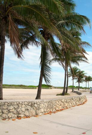 pedestrian walkway promenade with palm trees and sandy beach south beach miami florida photo