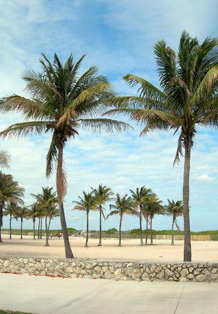 pedestrian walkway: pedestrian walkway promenade with palm trees and sandy beach south beach miami florida