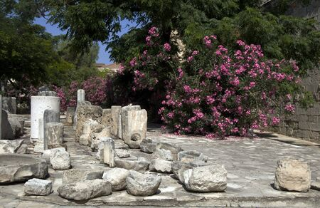 artifacts: historic Limassol Lemessos Castle ancient stone artifacts with flowering shrub plant Cyprus Mediterranean
