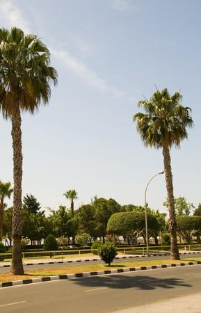 palm tree fringed pedestrian promenade Akrotiri bay Mediterranean sea Limassol Lemesos Cyprus