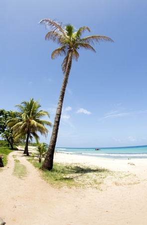 empty  desolate beach Caribbean Sea coconut grove trees Waula Point Big Corn Island Nicaragua Central America Stock Photo - 9291062