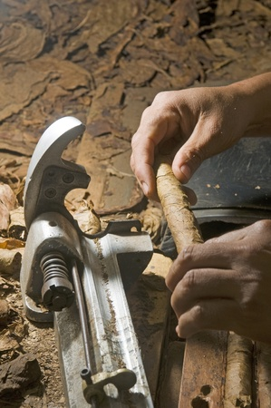 machine made: man hand rolling tobacco leaves on machine for quality hand made cigar production