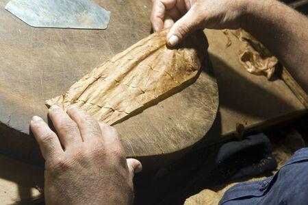 hojas parra: la mano del hombre rodar las hojas de tabaco de la mano de calidad hizo que la producción de puros