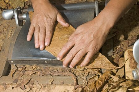 cigars: man hand rolling tobacco leaves on machine for quality cigar production