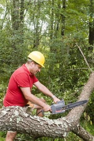 arborist tree surgeon wearing protective hard hat helmett using chain saw to cut suburban backyard tree fallen from hurricane damage Stock fotó