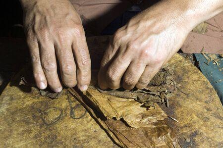 남자 손 압연 쿠바 도미니카 담배 품질의 시가 생산을위한 기계에 나뭇잎