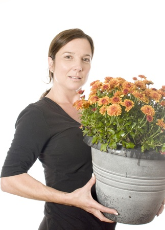 boomer: middle age woman gardener with  beautiful chrysanthemum mum flower plant in pot
