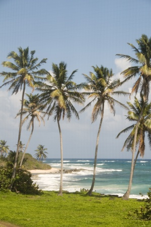 coconut palm trees undeveloped beach Content Point South End Corn Island Nicaragua Caribbean Sea Stock Photo - 12410905
