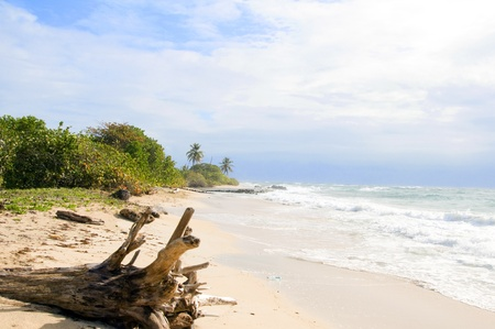 driftwood coconut palm trees undeveloped beach Content Point South End Corn Island Nicaragua Caribbean Sea Stock Photo - 12410904