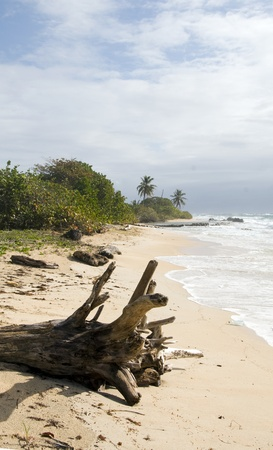 driftwood coconut palm trees undeveloped beach Content Point South End Corn Island Nicaragua Caribbean Sea Stock Photo - 12410903