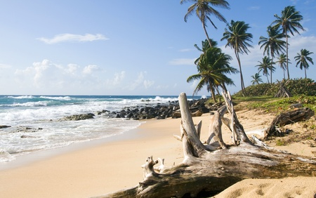 corn island: driftwood coconut palm trees undeveloped beach Content Point South End Corn Island Nicaragua Caribbean Sea Stock Photo