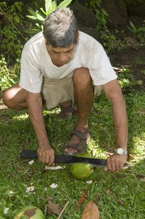 machete: native man using machete knife cutting fresh coconut  cut from tree Corn Island Nicaragua