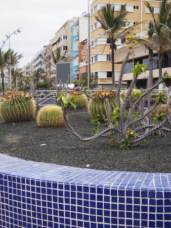 archtecture: cactus garden on walk promenade Las Canteras  Las Palmas Grand Canary Island Spain