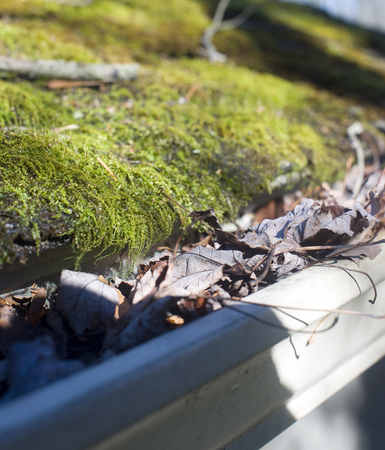 leaves in house gutter with moss growing on shingle roof Фото со стока