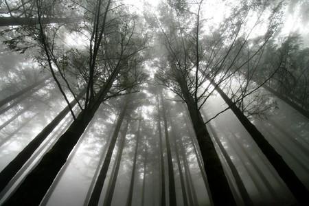trees at a foggy scenery Stock Photo