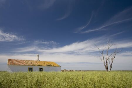 beautiful green field with a tree and an house at alentejo, south of portugal Stock Photo - 4264138