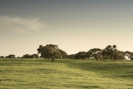 beautiful landscape with a green field at Alentejo, Portugal
