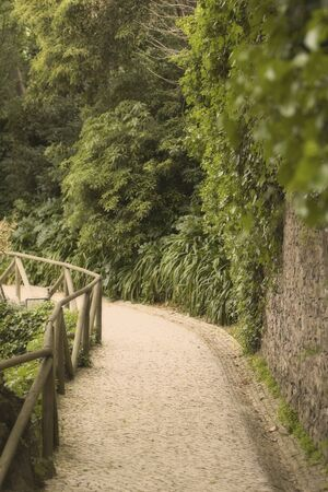 path across a green forest Stock Photo - 4264248