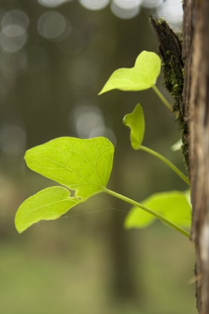 green leaf view at a forest near Sintra, Portugal Stock Photo - 4263899