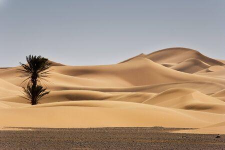merzouga: sand dunes at morocco desert, Merzouga