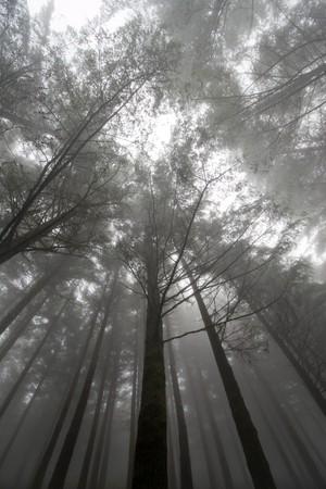 trees at a foggy scenery, Madeira Island, Portugal