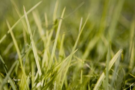 Healthy and fresh green grass Stock Photo - 4378338