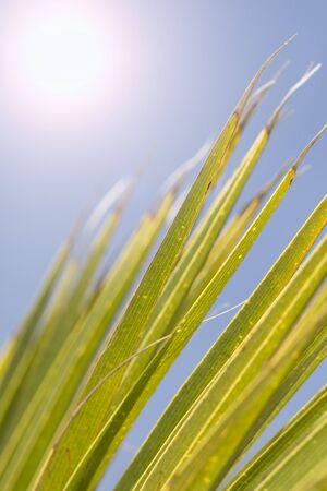 Detail tropical palm tree leaf, shallow DOF Stock Photo - 4406603