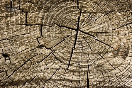 Old cracked wood texture close up Stock Photo