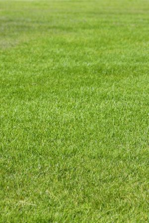 Green grass texture background (photographed with shallow DOF)