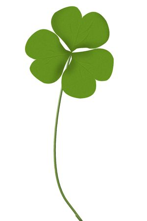 Irish three leaf clover isolated on white Stock Photo - 2834646