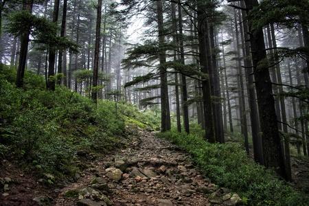 Triund Trek Route